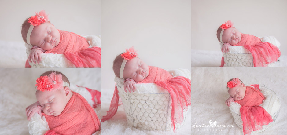 newborn in wire basket with coral blanket katy tx baby photographer
